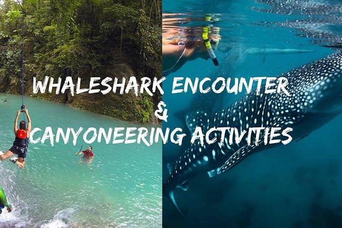 Oslob Whale shark swimming & Canyoneering Adventure, Kawasan Falls Day Tour