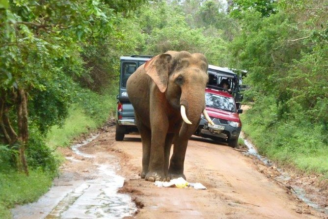 Udawalawe Safari Day Tour from Bentota and its' surrounding