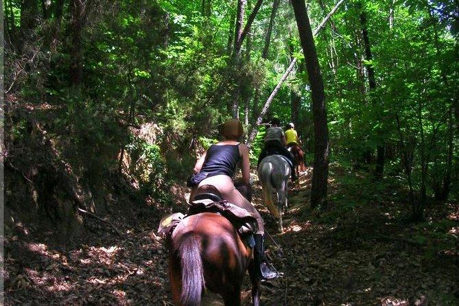 Horseback riding, Ziplines, Cenote & Lunch