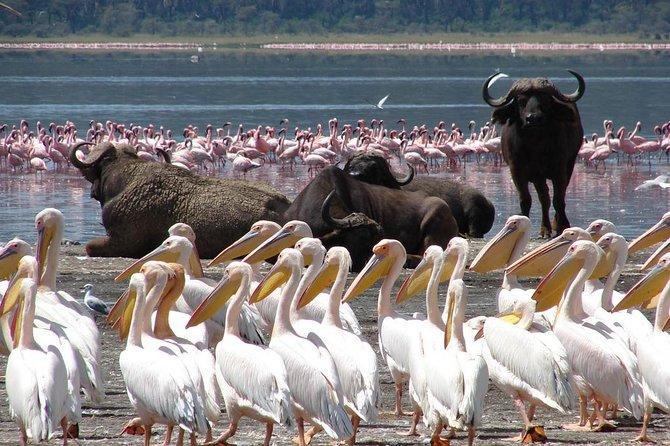 1-Day Lake Nakuru National Park Tour From Nairobi