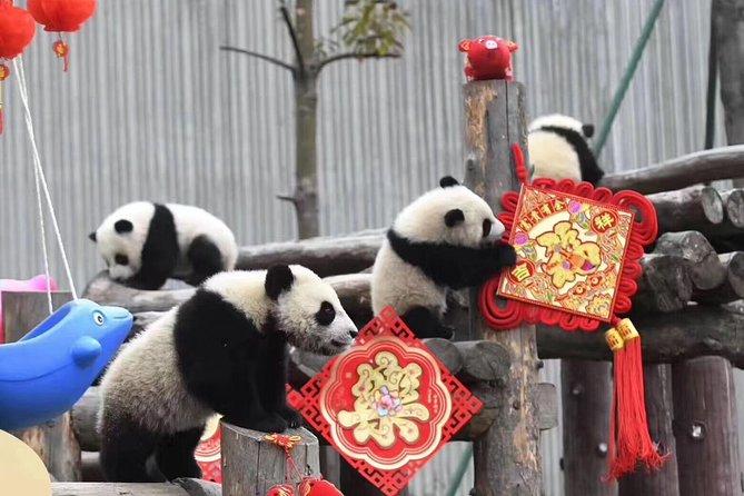 Chengdu Panda Base and Wuhou Temple,Jinli Ancient Town Day Tour