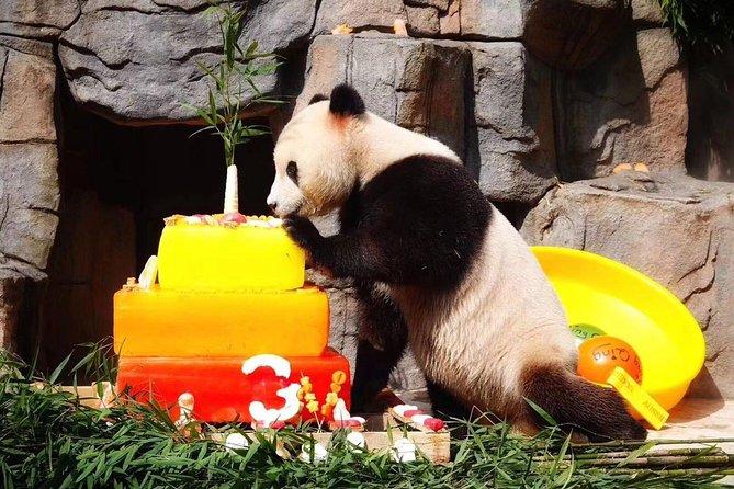 Chengdu Giant Panda Breeding Research Base and Private Tour of Sanxingdui Museum