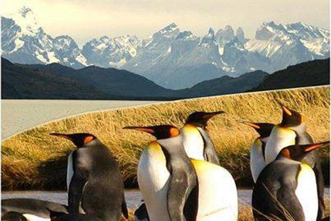 Torres del Paine & Tierra del Fuego ( king penguis)
