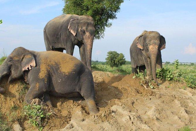 Pickup New Delhi & Visit To Tajmahal - Agra Fort & Wildlife SOS & Drop Jaipur