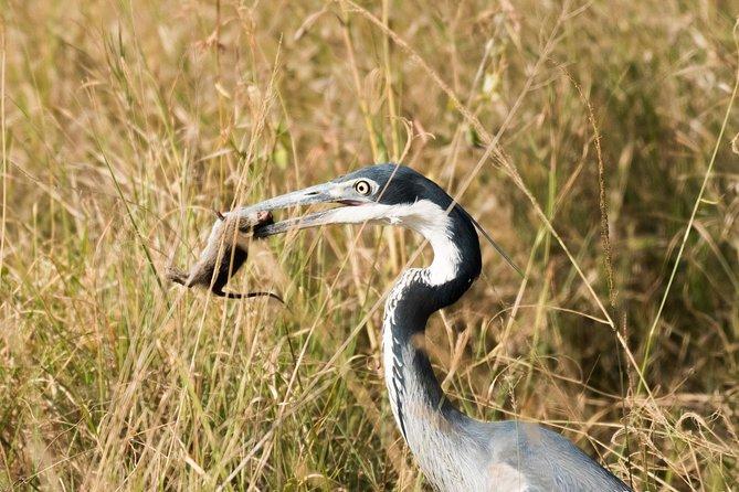 3 Days 2 Nights Short Amboseli Safari