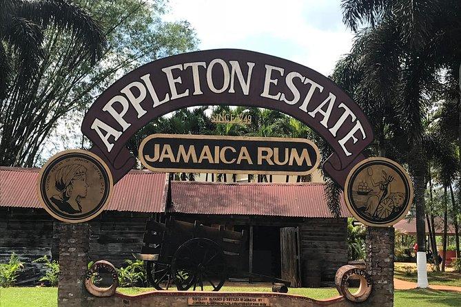 Appleton Rum, YS Falls, Black River Safari, and Horseback Ride & Swim Combo Tour