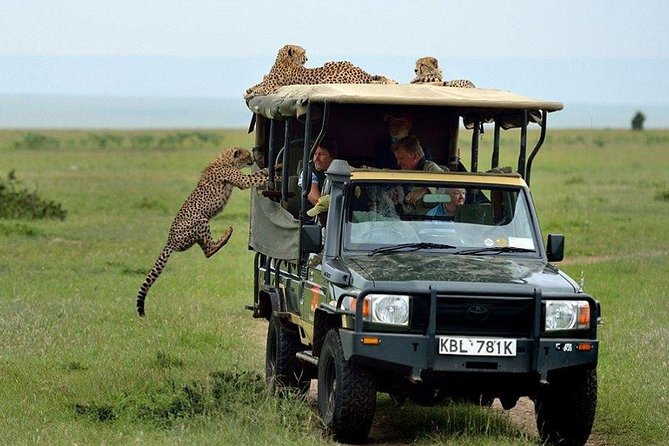 3 Days Ngutuni Saltlick Wildlife Safari