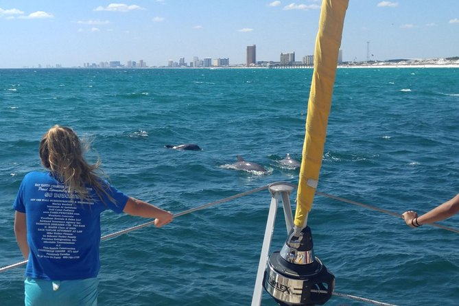 Dolphin Sightseeing in PCB