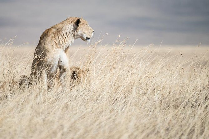 5 Day Serengeti, Tarangire, & Ngorongoro & Manyara Grass Root Safari. photo 4
