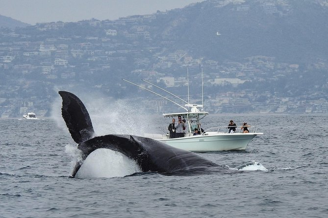 Ultimate Whale & Dolphin Watching Experience with Captain Nick in Newport Beach photo 1