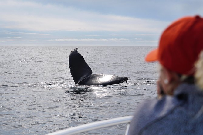 Ultimate Private Whale and Dolphin Watching Tour with Capt. Nick, Never Crowded!