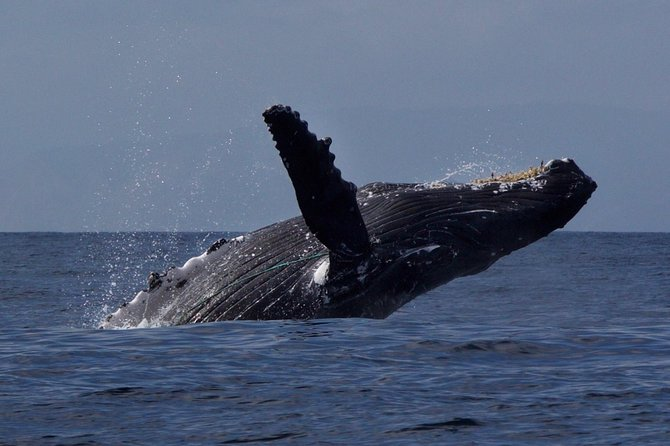 Ultimate Whale & Dolphin Watching Experience with Captain Nick in Newport Beach photo 3