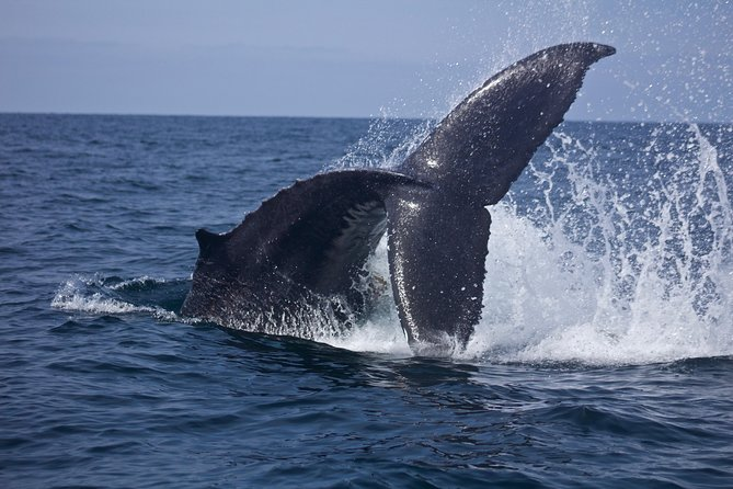 Ultimate Whale & Dolphin Watching Experience with Captain Nick in Newport Beach photo 18