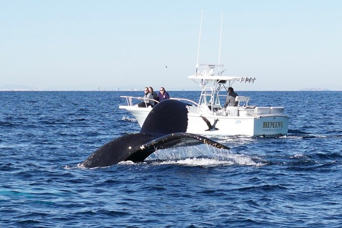 Ultimate Whale & Dolphin Watching Experience with Captain Nick in Newport Beach photo 13