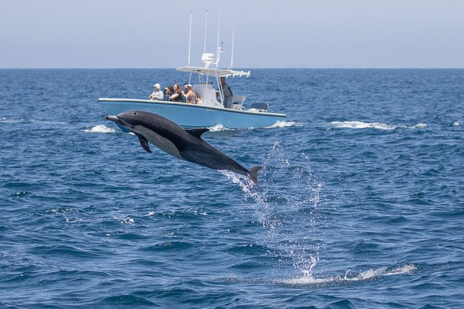 Ultimate Whale & Dolphin Watching Experience with Captain Nick in Newport Beach photo 4