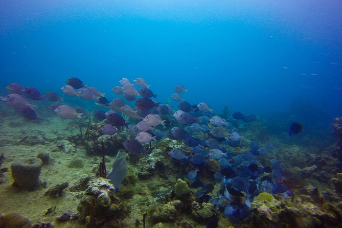 Full-Day Catalina Island Scuba Diving Tour from Punta Cana photo 19