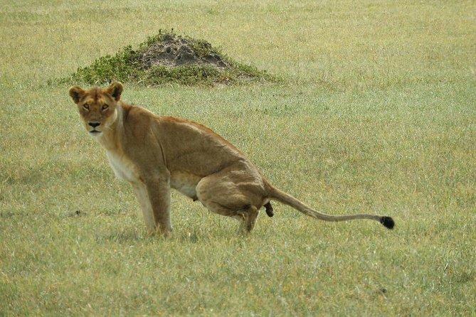 Full-Day Serengeti Tour from Mwanza