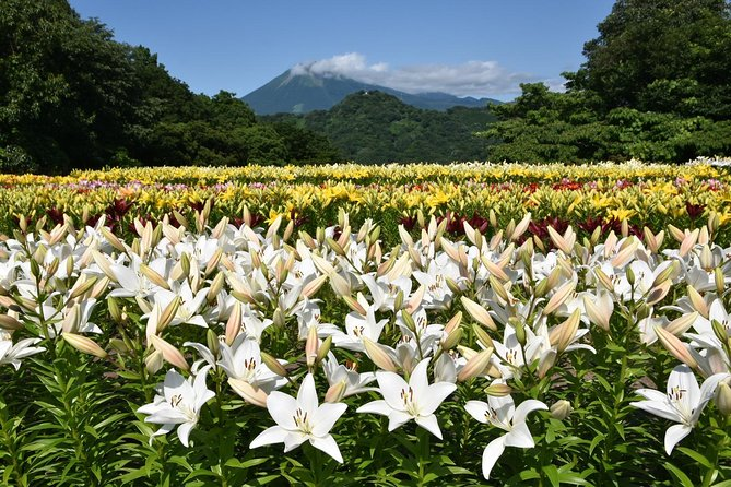 Tottori Hanakairo Flower Park Admission Ticket (for foreign customers only)