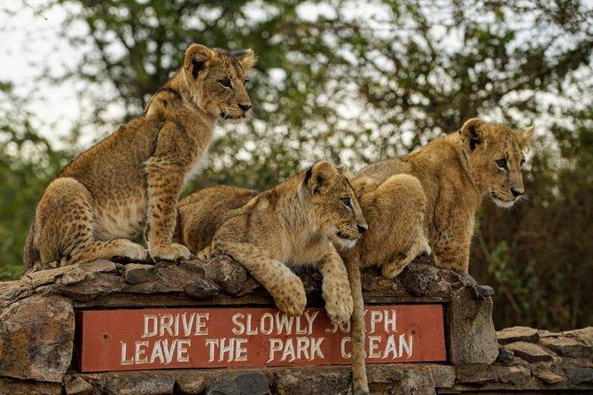 Half Day Nairobi National Park Guided Tour From Nairobi