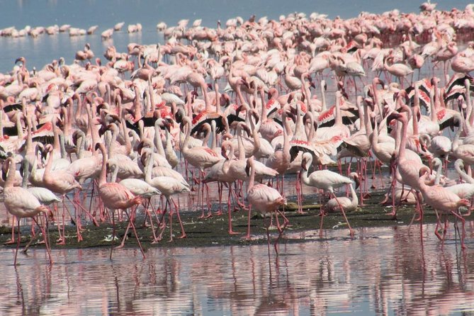Lake Nakuru Day Trip