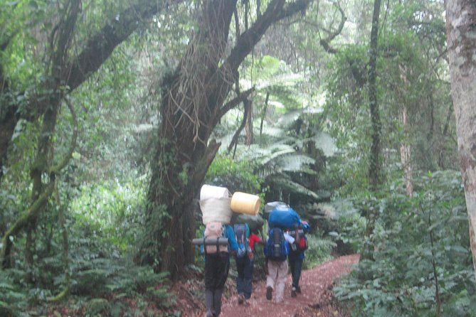 Kilimanjaro Climb Lemosho Route(6 Days) photo 3