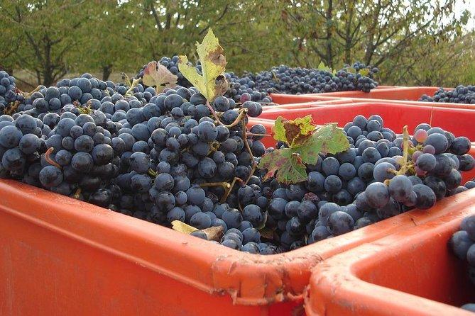 Lambrusco making: winery tour