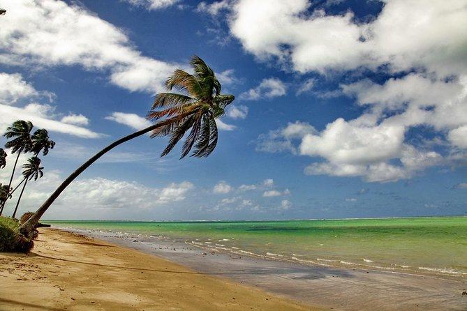 Rota Atlântica, viaje pelas mais belas praias do nordeste brasileiro
