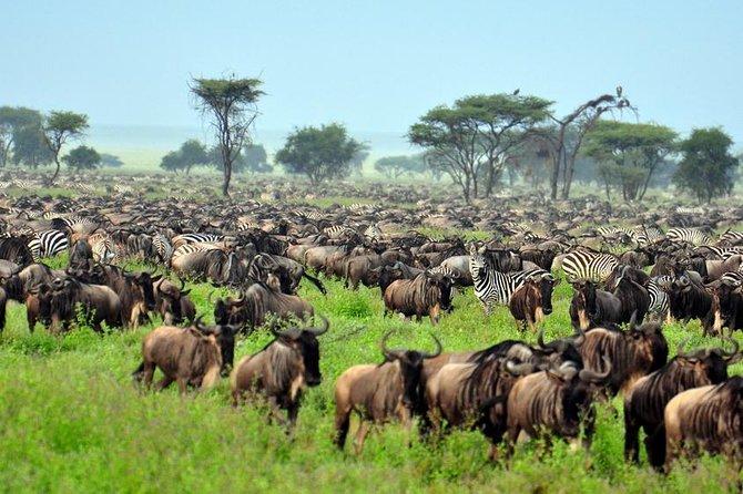 Private 6 Days Masai Mara Wildebeest Migration Safari Holiday