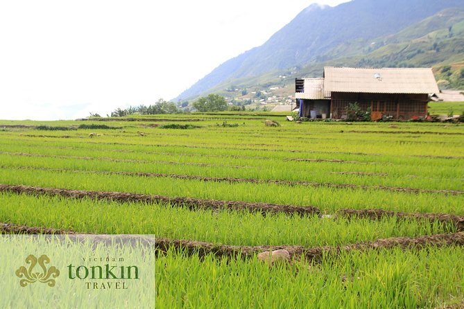 Sapa trekking villages homestay & hotels package tours from Hanoi in 3 days photo 4