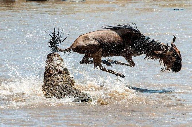 Private 8 Days Masai Mara Wildebeest Migration Safari Adventures