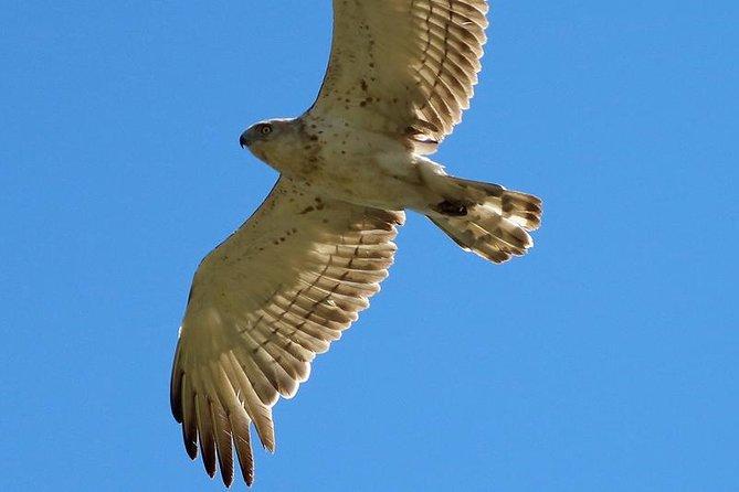 One-day Birding Around Sofia