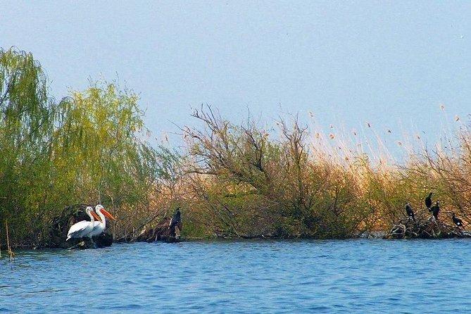 Two-day Birding Trip: Cape Kaliakra & Srebarna Lake