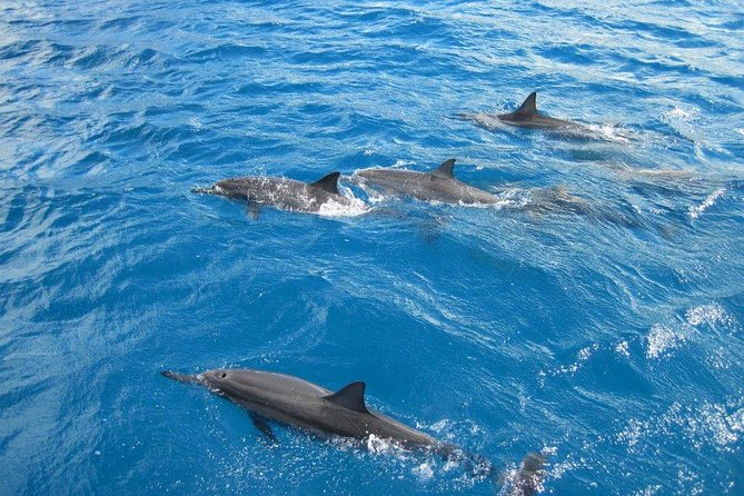 Waikoloa Dolphins or Turtles Guaranteed, Catamaran Morning Snorkel & Lunch
