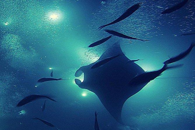 Manta Magic - Night Manta Ray Snorkel At Manta Village