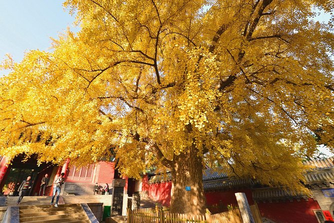 Private Day Tour to Shaolin Temple from Beijing by Bullet Train with Kungfu Show