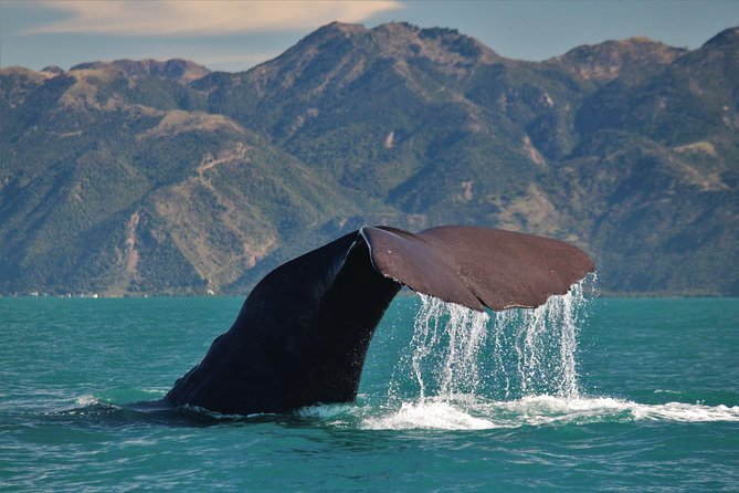 Whale Watching in Kaikoura by Boat