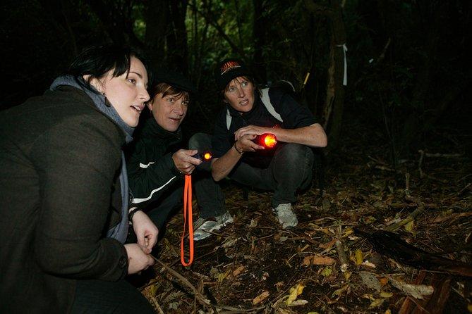 Zealandia - Small Group Eco Wildlife Night Tour