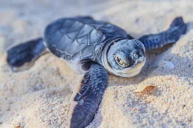 Skip the Line: Kosgoda Sea Turtle Conservation Project Entry Ticket
