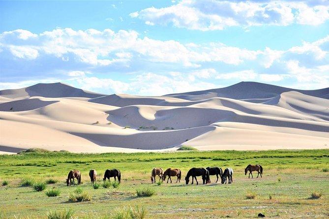 Gobi Expedition