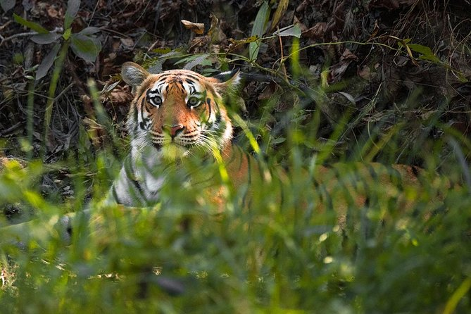 3N-4D Safari Tour in Pench Tiger Reserve along with Video Reel (All-Inclusive)
