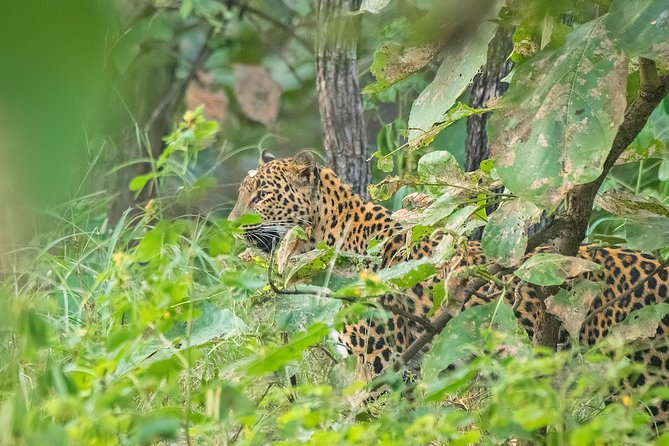 3N-4D Safari Tour to the Panna Tiger Reserve with a Video Reel (Safari Only)