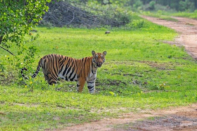 3N-4D Safari Tour to the Tadoba Tiger Reserve with a Video Reel (All-Inclusive)