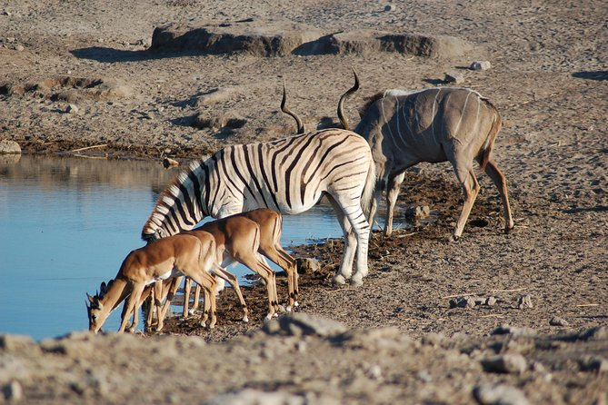 4 days Etosha National Park and Swakopmund Lodging