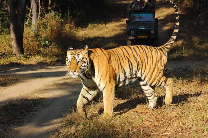 Private Tour: 2-Day Ranthambore Wildlife Safari Tour from Jaipur