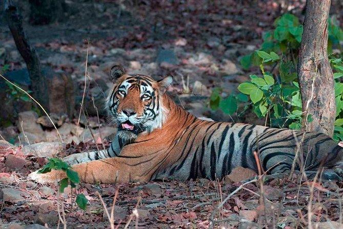 Adventures Ranthambore Wildlife Safari Rides and Taj Mahal Tour from Delhi