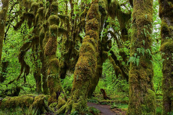 Hoh Rain Forest and Rialto Beach Guided Tour in Olympic National Park