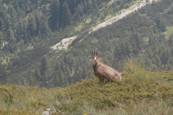 4 days in Pirin: Where the Slavic gods still live