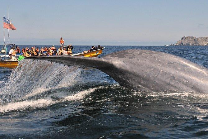 La Serena Whale Watching Cruise with Atacama Desert Tour