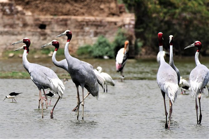 Sultanpur The wonder of Birding from Delhi