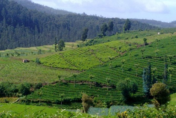 Ooty Hill station Escape from Bangalore
